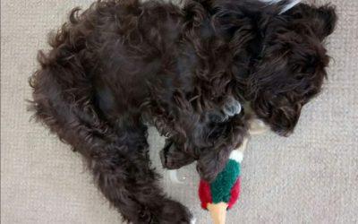 Puppy Toilet and Sleep training